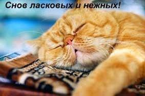 65856854_1288208266_40744542_snov_kot.jpg (283×188)