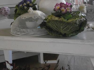 decorazioni vegetali:Il cachepot e' stato creato semplicemente eliminando le foglie centrali del cavolo per far spazio al vasetto con le primule.