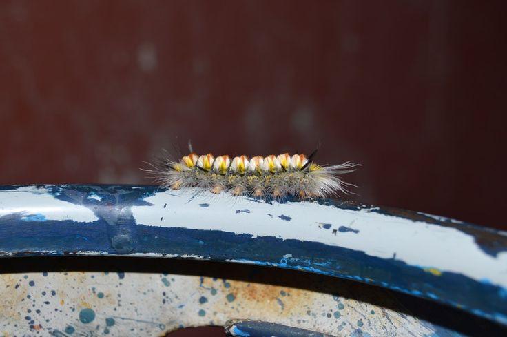 New free stock photo of hairy insect macro #freebies #FreeStockPhotos