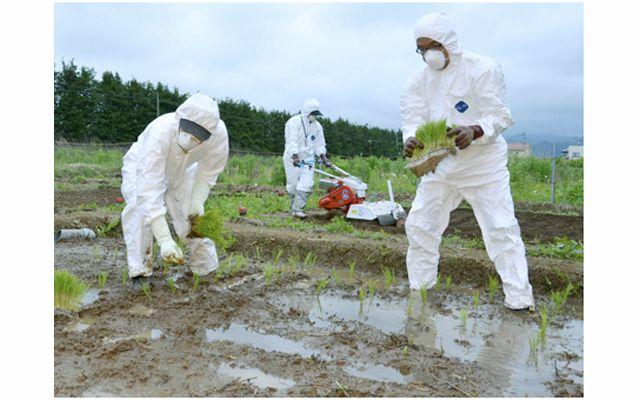 Im März 2011 war es im Atomkraftwerk Fukushima nach einem schweren Erdbeben und Tsunami zu mehreren Kernschmelzen gekommen. Es war die größte nukleare Katastrophe nach dem Super-GAU von Tschernobyl…