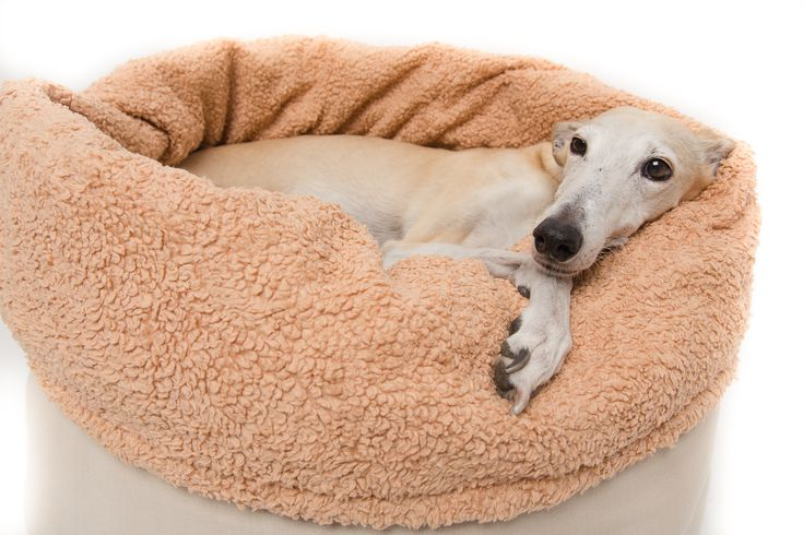 Kuschelsack für Hunde nähen – Uli Sunderman