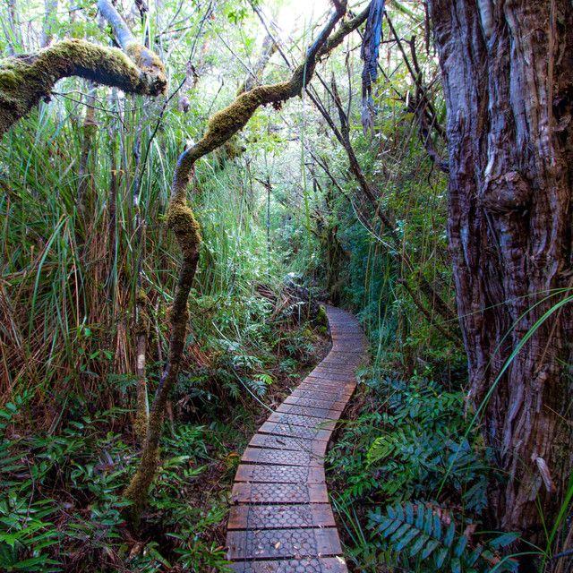 Way Down Under: A Road Trip though Tasmania