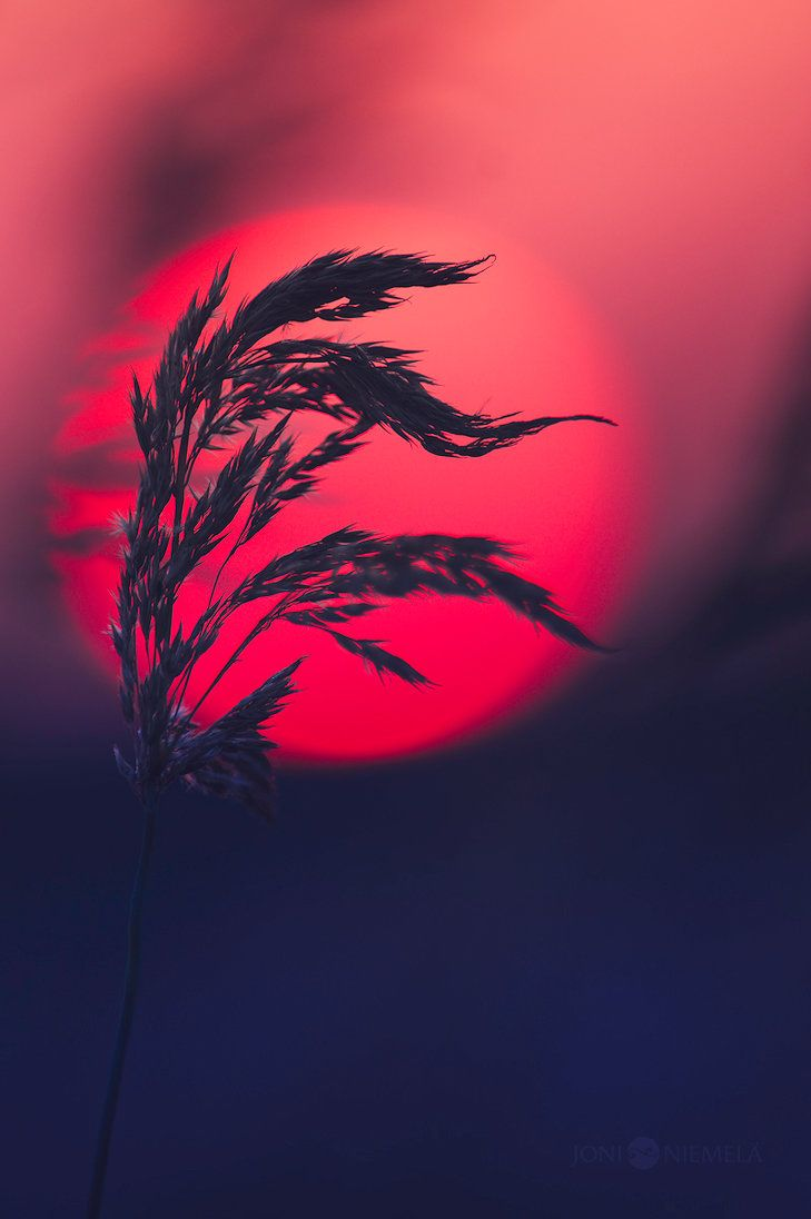 Sunset Reds by JoniNiemela