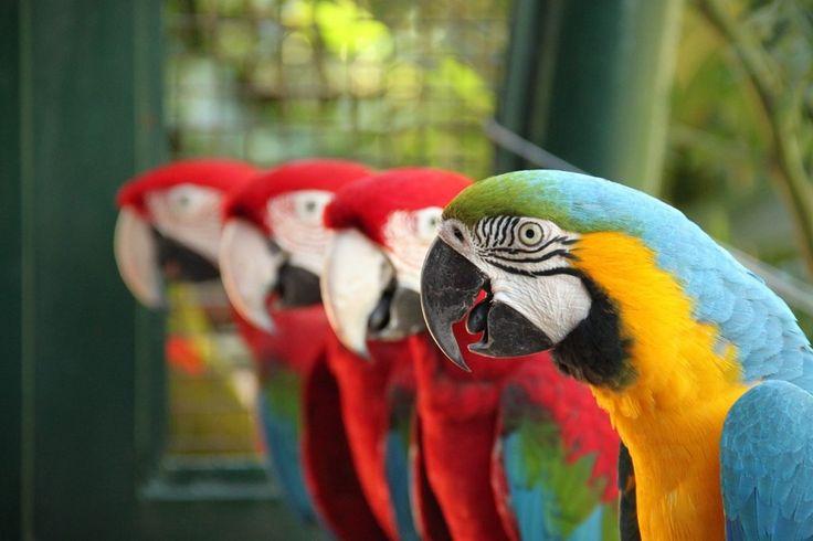 Por traz da exibição de animais, na maior parte quase extintos, esses locais possuem uma missão. Saiba qual é a importância dos Zoológicos no Brasil.