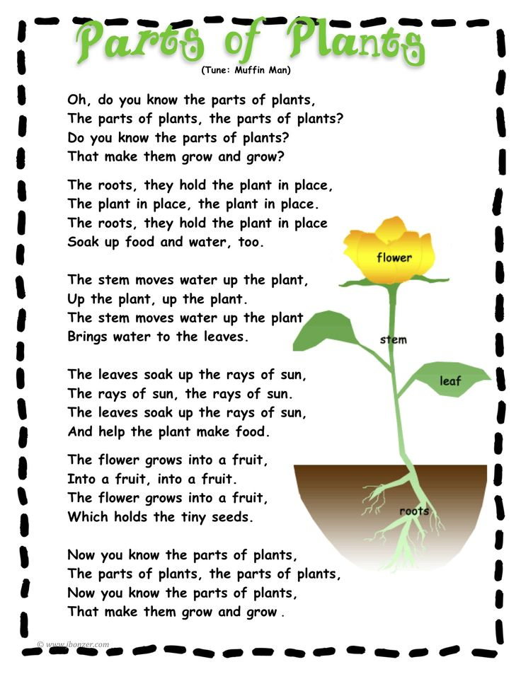 Cheesy 'parts of a plant' song!