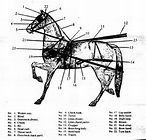 1000  ideas about horse harness on pinterest
