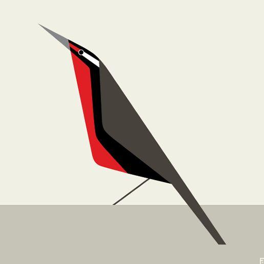 Loica chilena / Long-tailed meadowlark