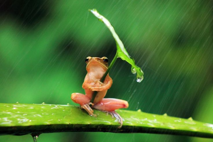 frog with umbrella Photo by Penkdix Palme --