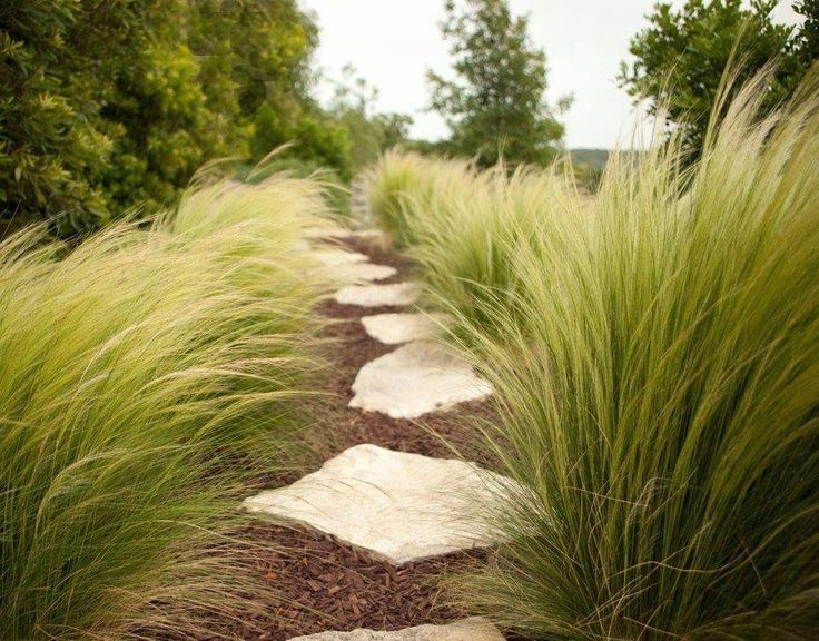 Stipa tenuissima Pony Tails - Vedergras - Palma Verde Exoten V.O.F.