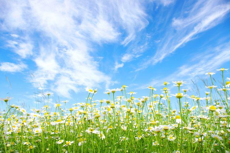 Скачать обои поле, лето, небо, солнце, облака, голубое, ромашки, раздел цветы в разрешении 9344x6208