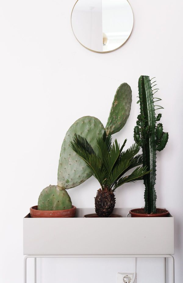 cacti and palm trio
