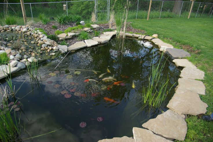 30 best images about life around my little pond on for Koi pond labradors