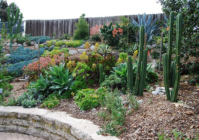 Manhattan Beach This 20-year-old community garden is a long-standing bastion of earth-friendly landscaping and important neighborhood wildlife habitat. Irrigated mainly with reclaimed water, the 2/3 acre property is planted with a colorful medley of mostly California natives with other attractive Mediterranean-climate plants that thrive in sandy soil and coastal conditions. A pondless waterfall, dry streambed, and composting toilet are just a few points of interest.