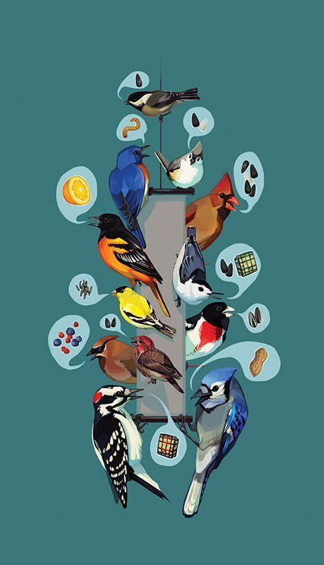 Preferences of Common Feeder Birds. Interactive list of backyard birds and what they like to eat, from the Cornell Lab of Ornithology.