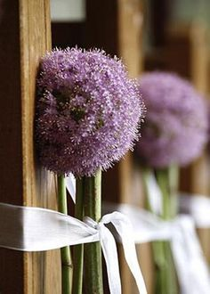 Allium is a large round of tiny clusters flowers. It makes a dramatic statement with it's leafless stem and large head.