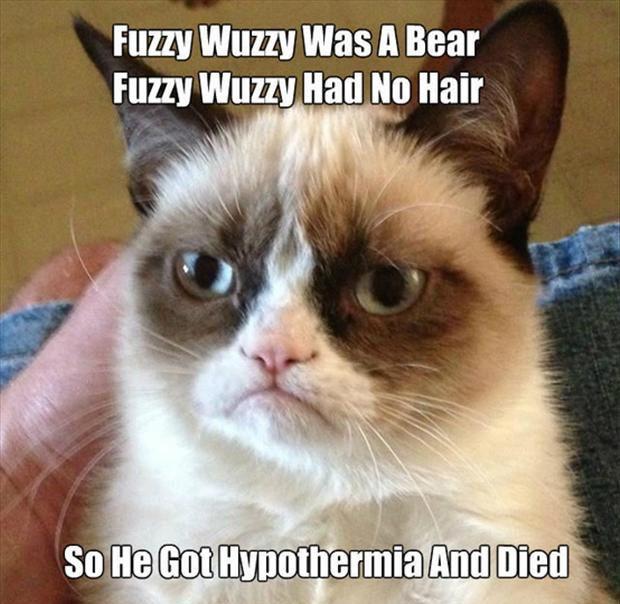 :D Grumpy Cat #GrumpyCat #Humor #Meme