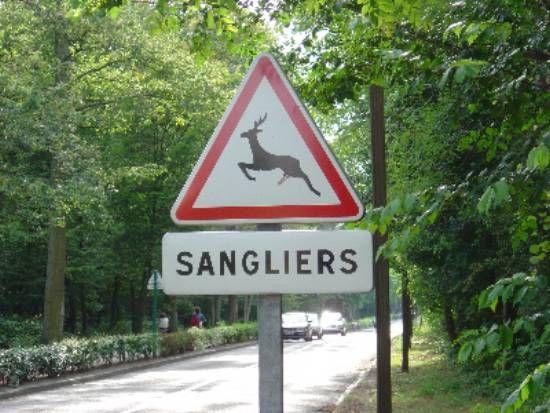 Voyages et moto - Des panneaux très instructifs/Sangliers