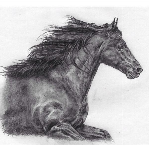 30 best images about Dibujos De Caballos / Horse Drawings ...