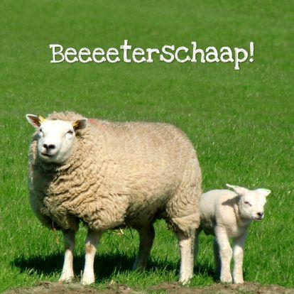 Spreekt voor zich! Met een grappig kaartje voelt iemand zich snel beter. Wijzig tekst naar wens. These dutch sheep wishes you to geeeeet weeeell sooooon... text can be changed! Kaartje2go - creagaat beterschap