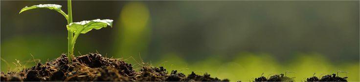 În natură, ingredientele noastre sunt neatinse de îngrășămintele artificiale și substanțele chimice sintetice. De asemenea, acestea provin dintr-un mod durabil din punct de vedere ecologic, maximizând utilizarea resurselor regenerabile și minimizând consumul de energie, sol și apă. https://phytsmakeup.ro/content/11-machiaj-certificat-Organic