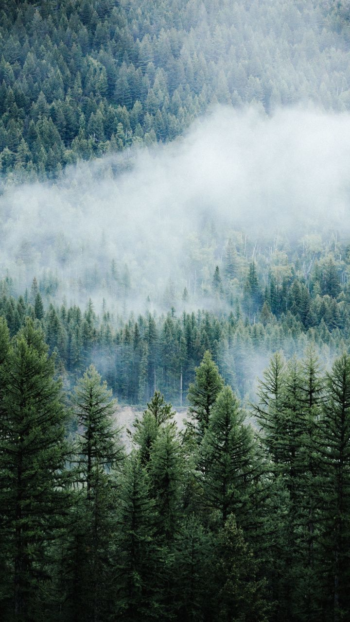 Forest Fog Tree Nature Montana 720x1280 Wallpaper Tree Wallpaper Iphone Forest Wallpaper Tree Wallpaper