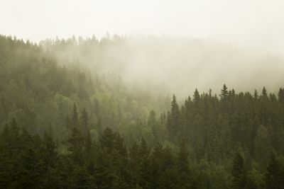 Green gradient in foggy forest after the rain. Jämtland, Sweden. Available as poster at printler.com, the marketplace for photo art. Photographer Sofia Ekenlund