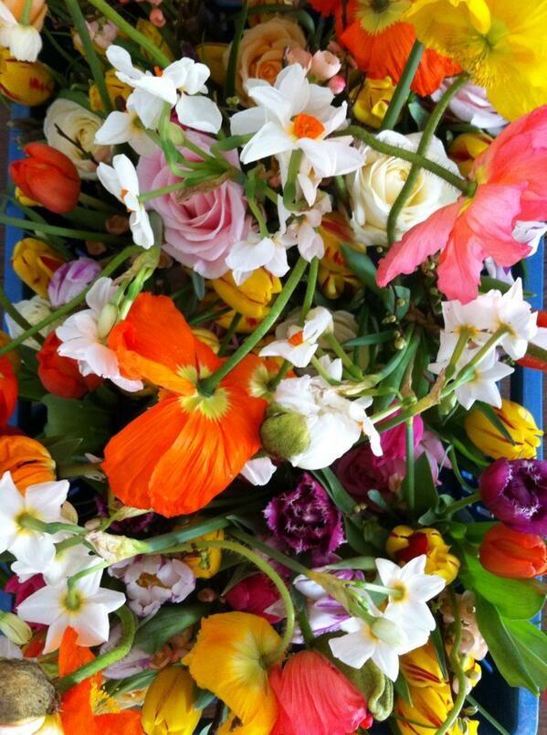 Spring flowers #sabethenmickey