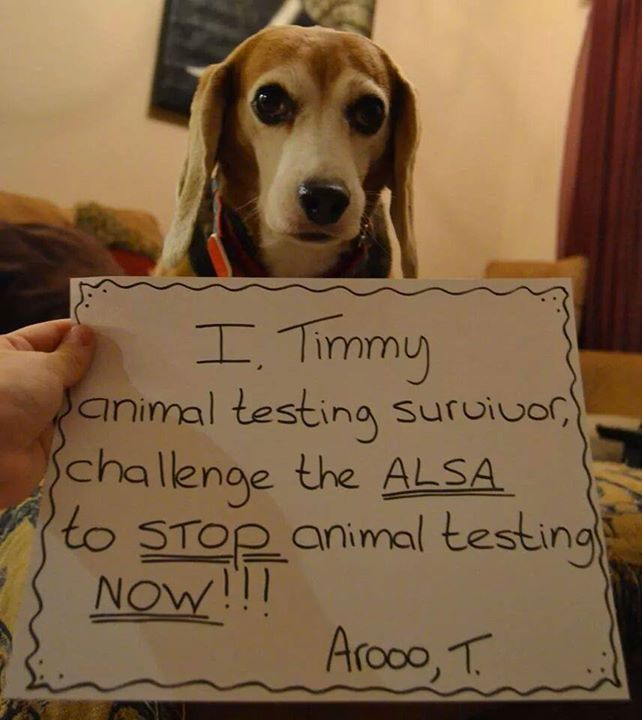 Animal Cruelty i'm writing a essay about it but...?