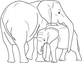 ausmalbild elefantenkuh mit baby im zoo in 2020 | zootiere