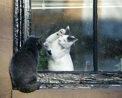 Cats in Brooklyn; Photo: Kathy Willens, AP, from: http://gothamist.com/2004/03/03/breaking_news_cats_in_brooklyn.php