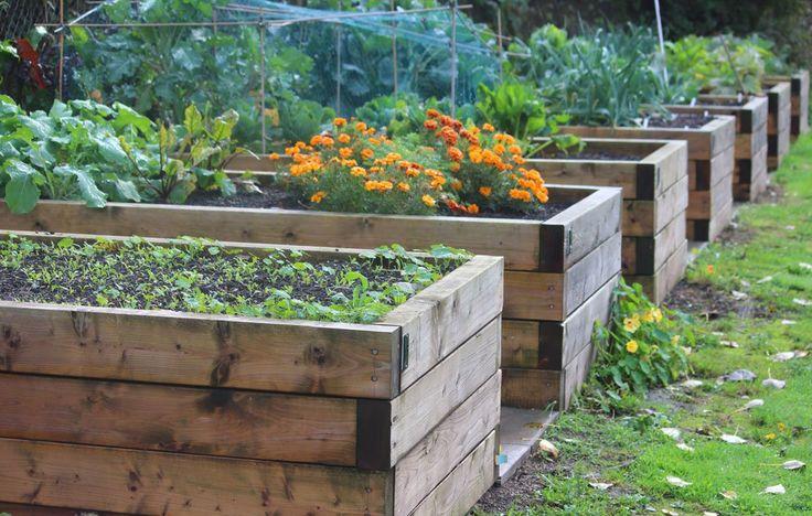 352 Best Herbs Veg Fruit Etc Images On Pinterest Strawberry Flowers Garden And Vegetable Garden
