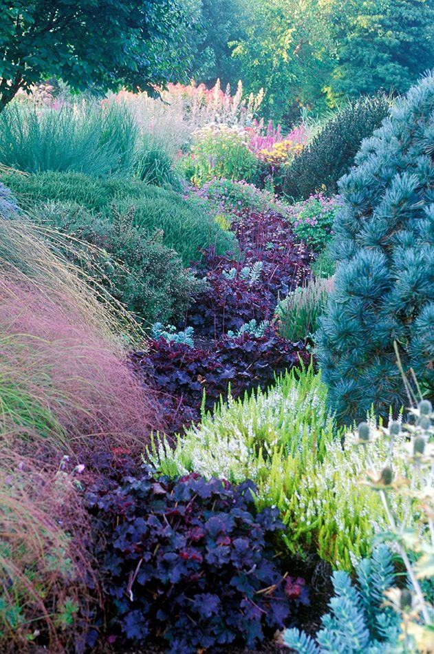 Heuchera 'Prince; All Season's Bed, Foggy Bottom, Bressingham Gardens, Norfolk, UK: Idea, Seasons, Bed, Coral Bells, Rivers, Heuchera Prince, Flower, Color Combination