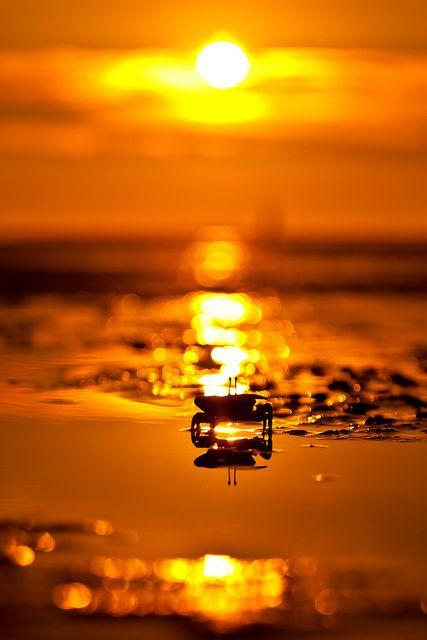 Orange Sunset by wrc213 on Flickr.