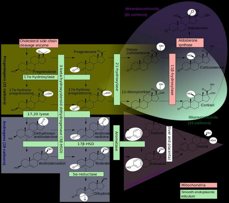 steroid hormones biosynthesis and pathways
