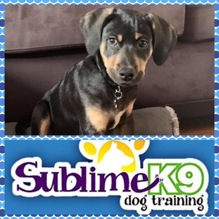 Long Island Dog Trainers Sublime K9 in 2020 Therapy