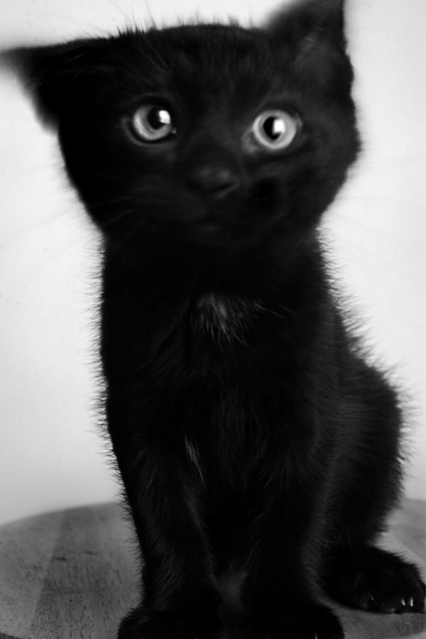 adorable little, black kitten. :) So cute and fluffy ...