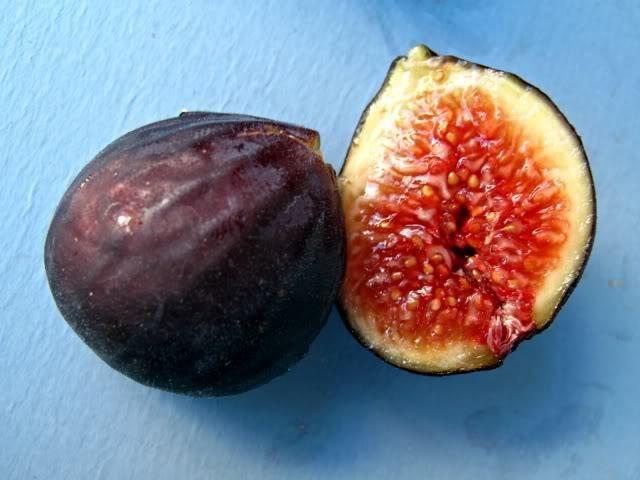 Fig varieties | Fig varieties collection | Trees of Joy