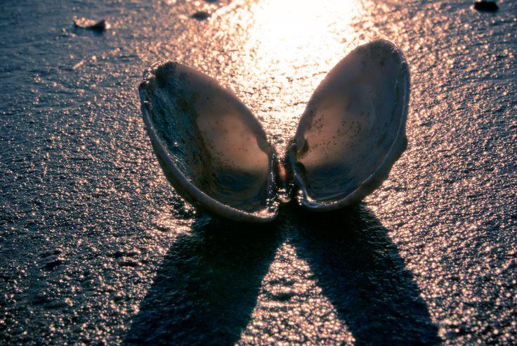 Shell angle
