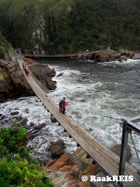 The Tsitsikamma National Park on the Garden Route is one of the most beautiful places in South Africa with its forests, sheer cliffs and spectacular coastline. The 1 km long mondwandelpad of camp at Storms River Mouth is the most popular hike in the park and the highlight is the three suspension bridges in the estuary itself.