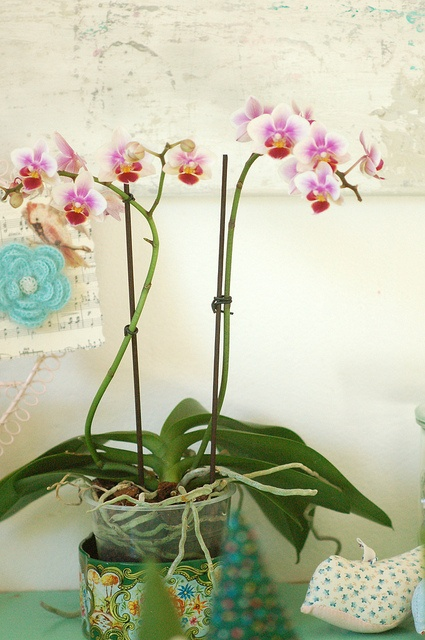 17 best images about orchid growing tips and tricks on pinterest spinning orchid care and - Seven tricks for healthier potted plants ...