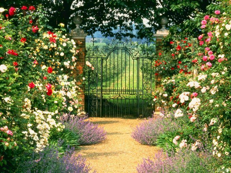 Где лучше разместить розы в саду? | Ландшафтный дизайн