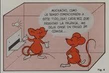 experimento de la rata por Skinner #condicionamiento operante