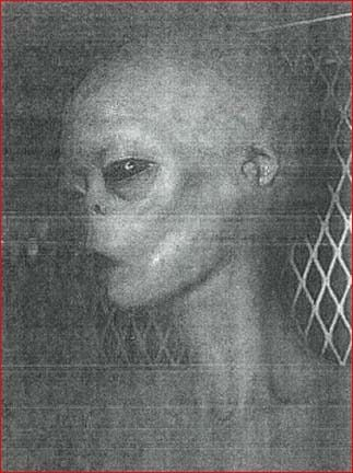 """THE ABOVE IMAGE IS A PHOTO OF J-ROD THE INSECTOID WHO IS IN SOME KIND OF SPHERE AT AREA 51:"