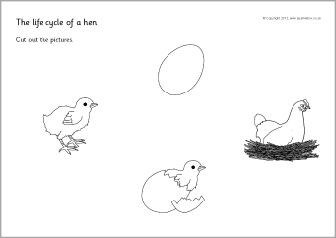Chicken life-cycle cut and stick (SB2430) - SparkleBox