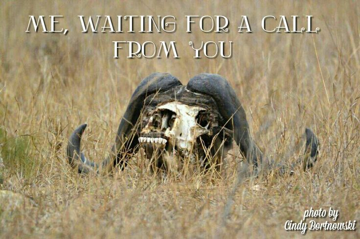 Kruger National Park, waiting for a call