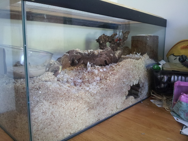 How a Gerbils cage should look like