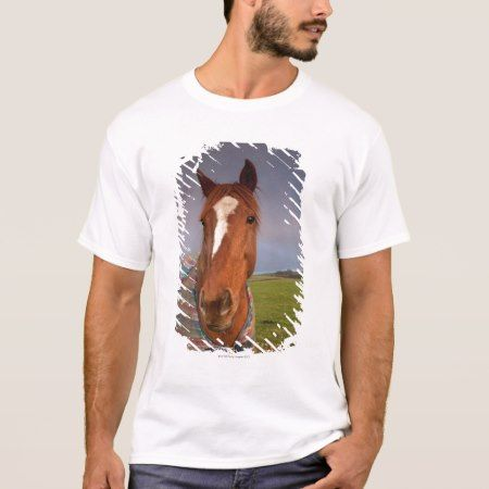 Portrait Of A Horse With A Rainbow In The Sky T-Shirt - click to get yours right now!