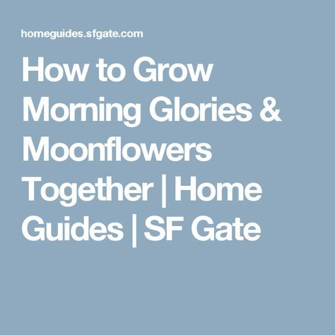 How to Grow Morning Glories & Moonflowers Together | Home Guides | SF Gate