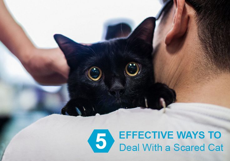 Is Your #Kitty Scared? If Yes; Follow These 5 #Effective Ways To Deal With A #Scared #Cat -