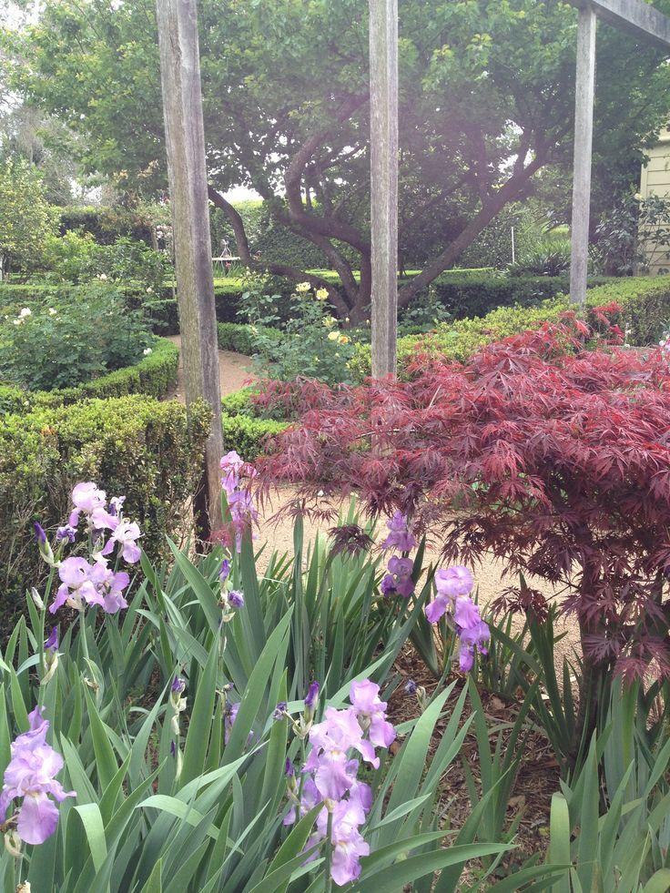Irises and Japanese maple just near the Rose Garden at Merribee www.merribee.com.au